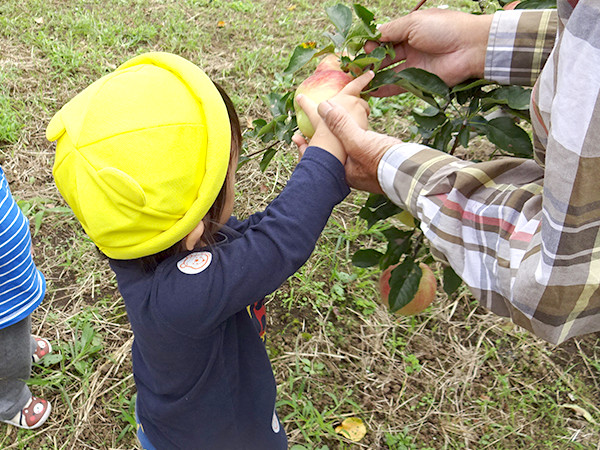 リンゴ園のお世話・観察・収穫の通年体験